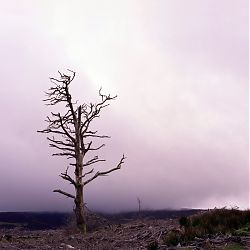 Title:Tree Artist:Shelley Corcoran Year:2010 Medium:Photography  Dimensions:76x76cm Price:€200