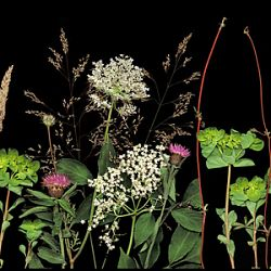Title:Embankment Florilegium Artist:Veronica Nicholson Year:2020 Medium:Digital Photograph Dimensions:30x90cm Price:€250