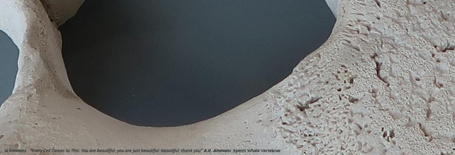 carousel jo kimmins sperm whalevertebrae